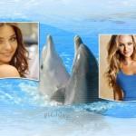 colocar-fotos-delfines