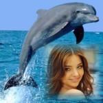 editar-fotos-con-delfines-gratis