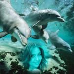 editar-fotos-con-delfines
