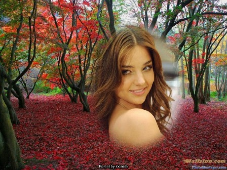 Editar Fotos En Bosque