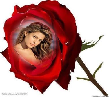 Hermosas fotos de rosas
