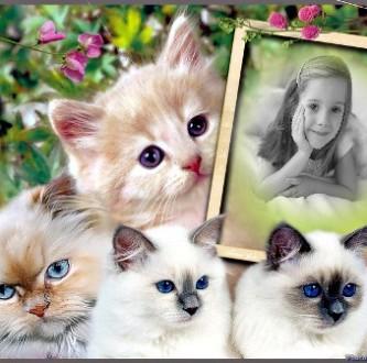 editar fotos con gatitos