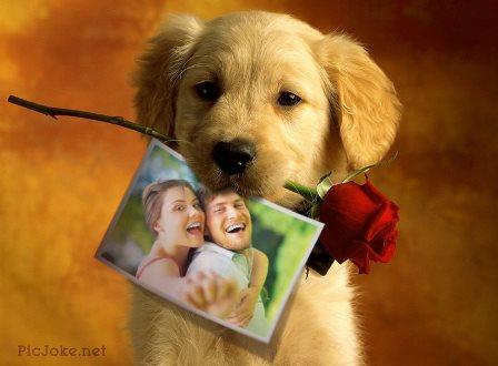 Editar fotos con un cachorrito