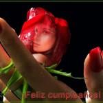 Editar fotos con una rosa