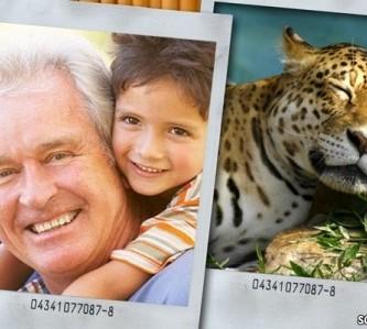 Editar fotos con un tierno tigre