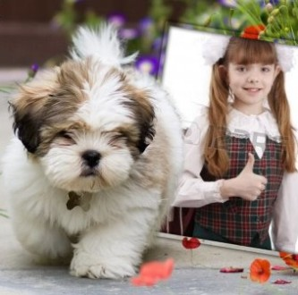 Editar una foto con un lindo cachorrito