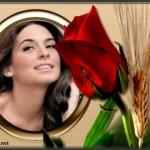 Efectos para fotos con una rosa